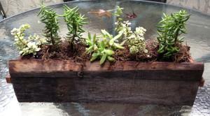 Planter By Chad Elley