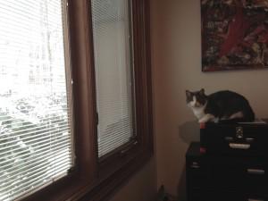 Panny enjoying the view.